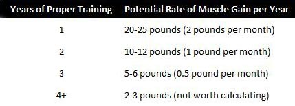how long does it take to build muscle graphic