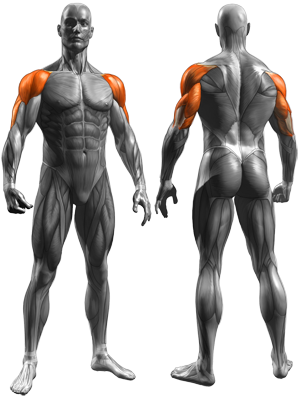 muscles worked with the skull crusher exercise