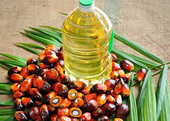 palm oil best cooking oils
